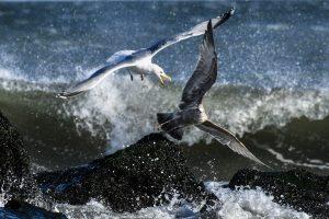 Seagulls by Brian Horton